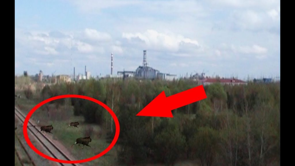 Mutanti la Cernobîl