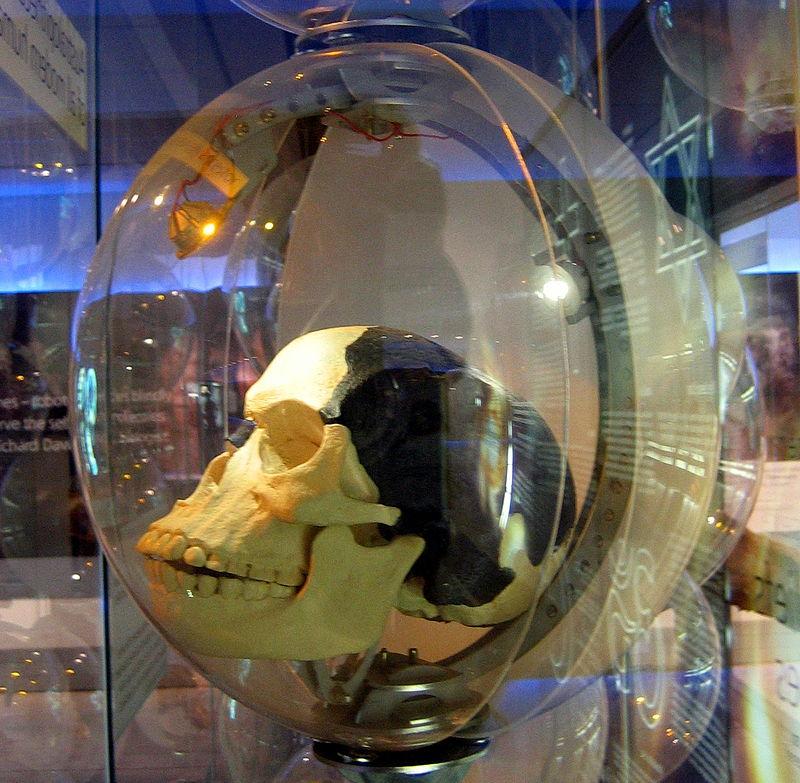 Replică a craniului omului din Piltdown. Autor foto Anrie,ianuarie 2010, sursă Wikipedia.