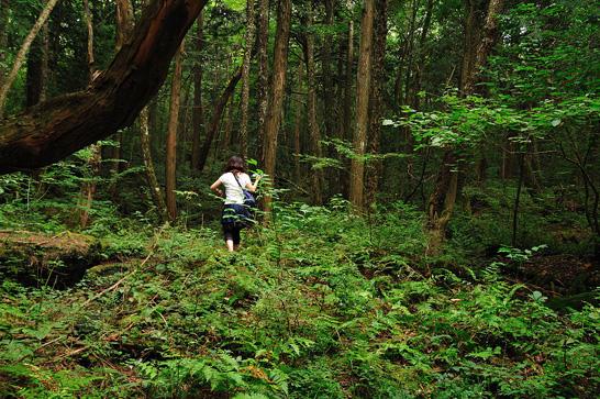 Aokiagahara, pădurea morţii